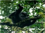 Kibale Forest , Queen Elizabeth and Bwindi Impenetrable Forest- 7 Day, 6 Ni image