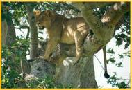 Queen Elizabeth National Park- 3 Day, 2 Night Safari