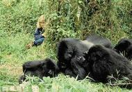 12 day KENYA  - UGANDA GORILLA/CHIMPS TREKS TOUR