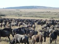 The Great Migration - 6 days in Kenya